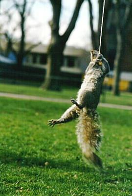 squirrelinaction.jpg